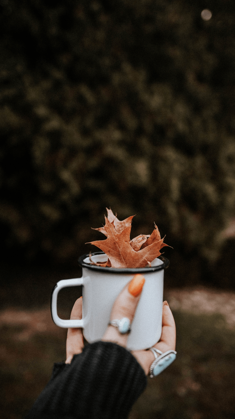 A Cup of Fall Wallpaper